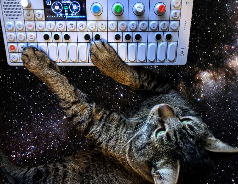 My cat playing the OP-1 synthesizer